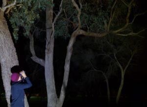 Spotlight on nocturnal wildlife
