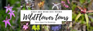 Wild-flower-season-mandurah
