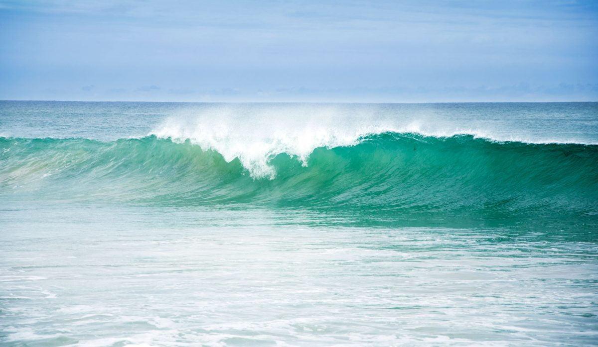 aquatic coastal