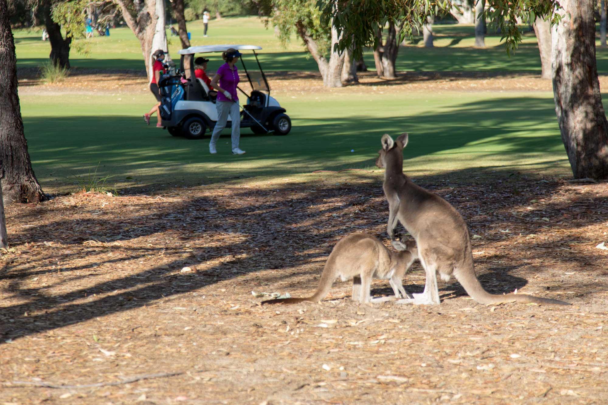 Mandurah Golf and Country Club