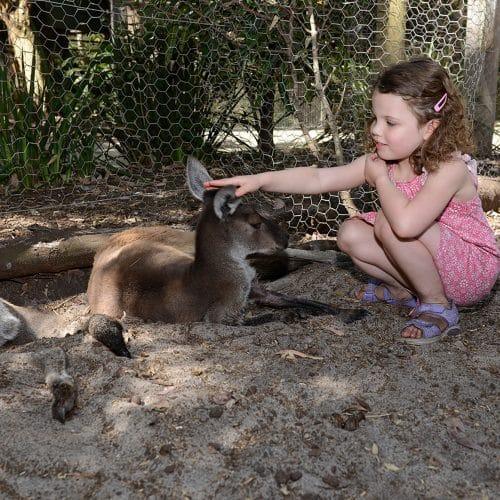 Peel Zoo BUP3632