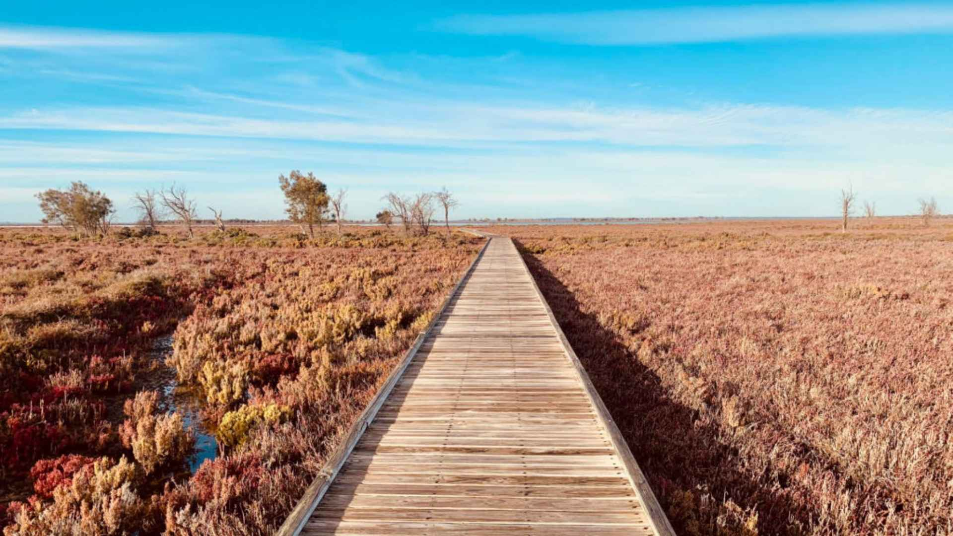 Creery-Wetlands-Nature-Reserve