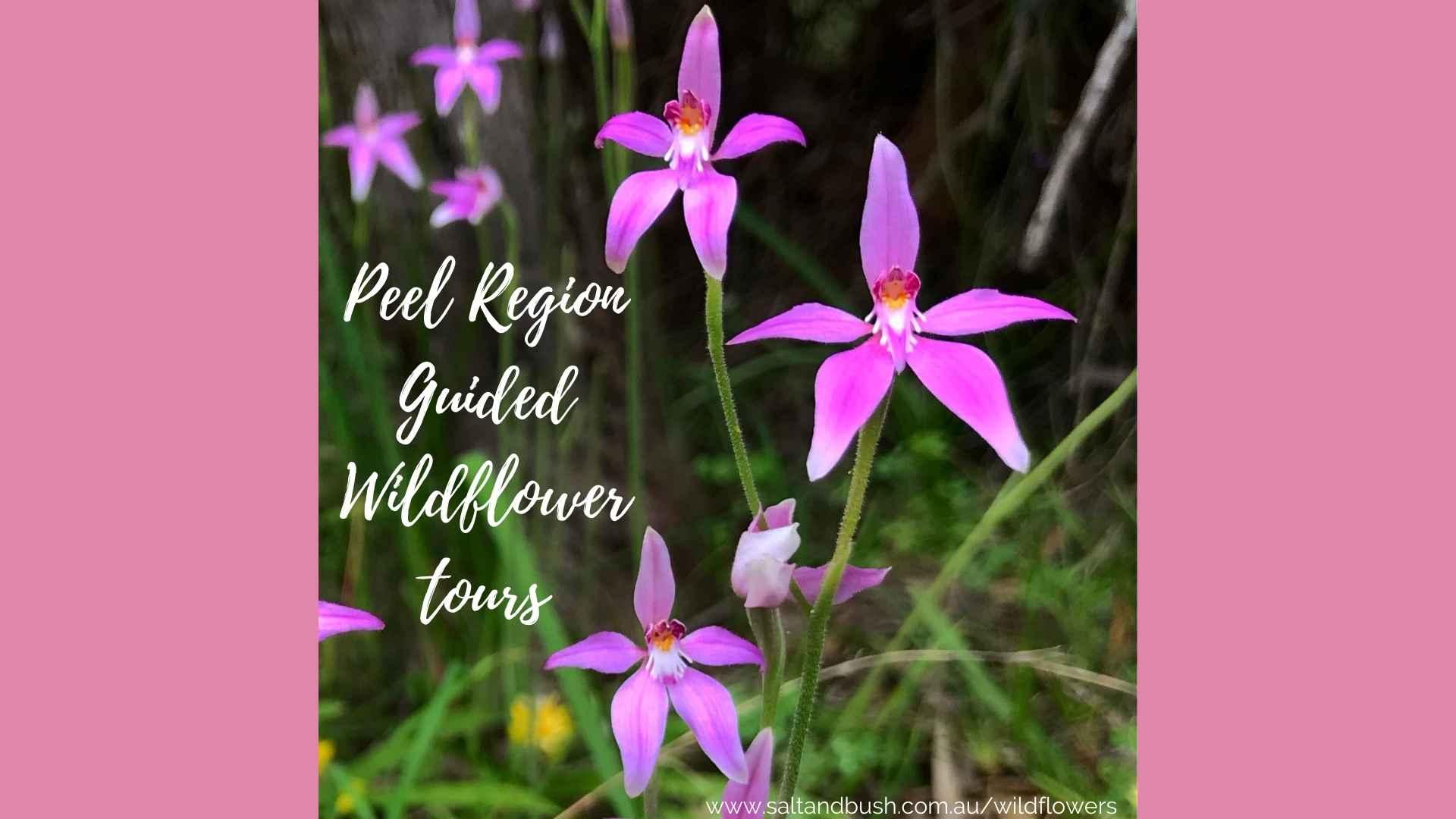 wildflower-season