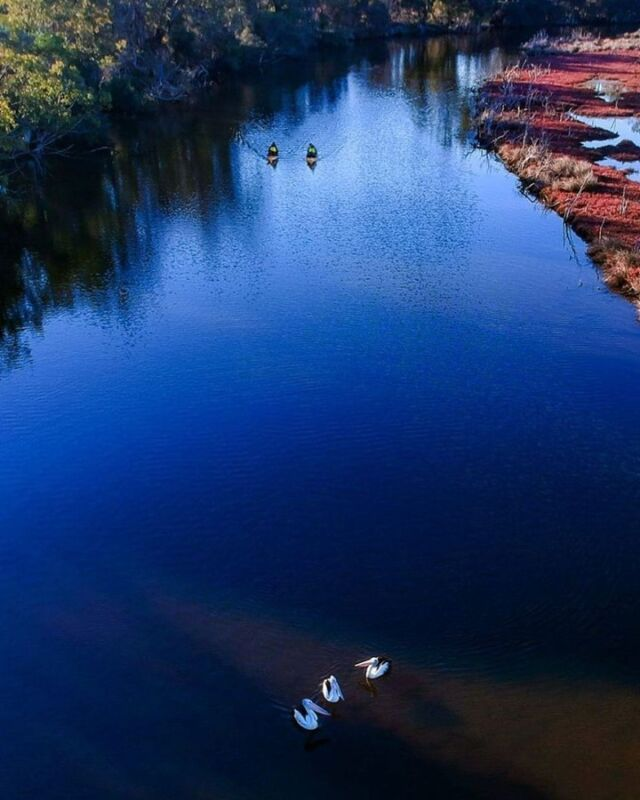 This is what we mean when we say waterways for days! And with all kinds of wonders to see along the way, you'll love exploring our calm, beautiful waterways.  📷 Thanks to @saltandbushecotours - the wonderful work of local eco-touring experts.  #mandurah #mandurahmoment #visitmandurah #relaxedbynature #wanderoutyonder #thisiswa #holidayherethisyear #westernaustralia #perth #seeperth #perthdaytrip #perthholidays #sunset #waterwaysfordays #thingstodo #kidsinperth #nature #australia #seeaustralia